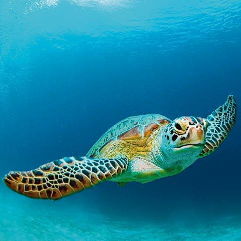 TurtleCode.jpg